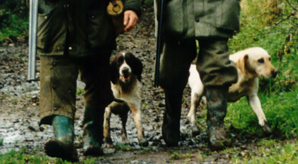 Gun Dog Working Dog