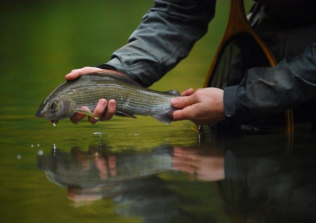 Fishing Breaks image